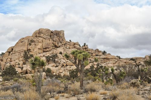 Joshua Tree National Park (California): New Year in the parks /anno nuovo nei parchi
