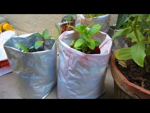 Believe It Or Not You Can Grow Plants In Used Plastic Bags