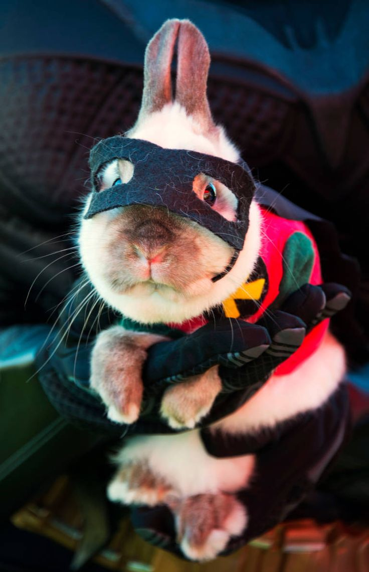 Best 25+ Animals in costumes ideas only on Pinterest | Dogs in ...