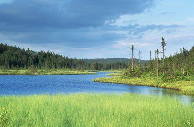 A grassy pond in a boreal forest in Terra Nova National Park, Newfoundland and Labrador.