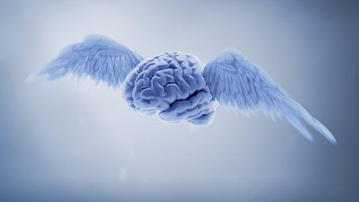 Non si può parlare di fuga di cervelli, ma di un vero e proprio furto. All'università del Texas sono scomparsi ben 100 cervelli conservati nella formaldeid