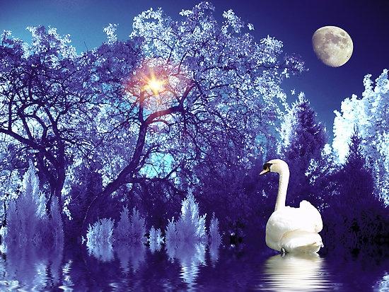 Elegant Purple Wedding At Black Swan Lake: 17 Best Images About GG Pops! Color Me Purple... On Pinterest