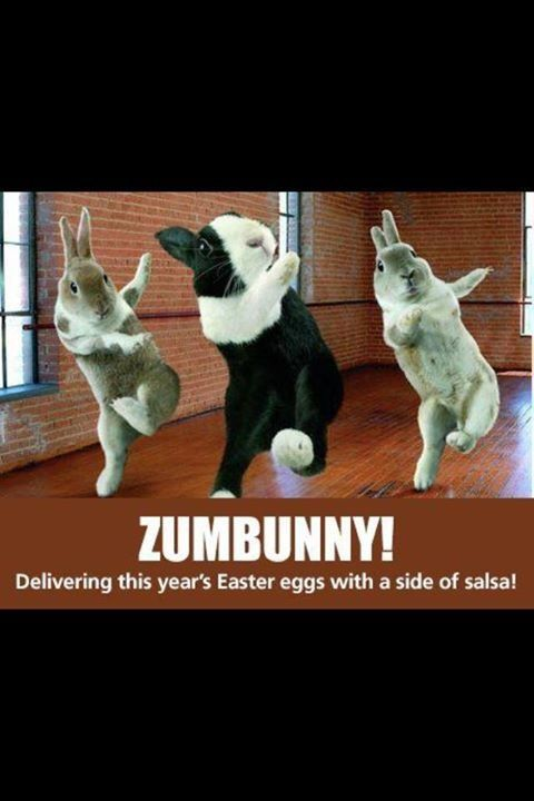 Zumbunny? Delivering eggs with a side of salsa... weird yet funny. #zumba