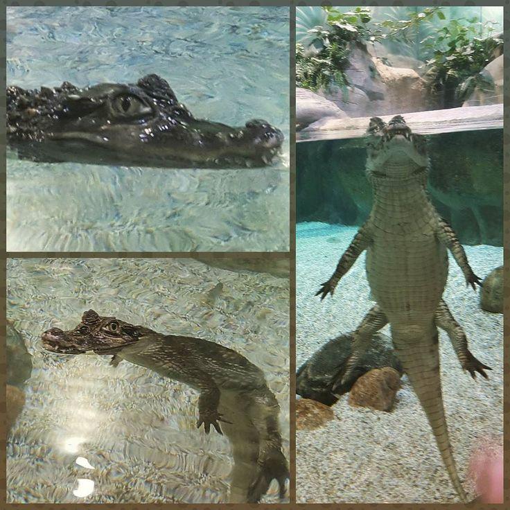 #crocodile #океанариум #вднх #взгляд #милашка #крокодил