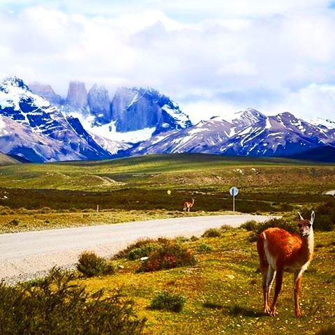 #SouthAmerica is home to some of the most unique #animals out there like this guanaco at #TorresdelPaine via @flightandpursuit