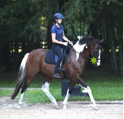 To Bit Or Not To Bit ... And What Is 'Real' Dressage? By Karen Rohlf