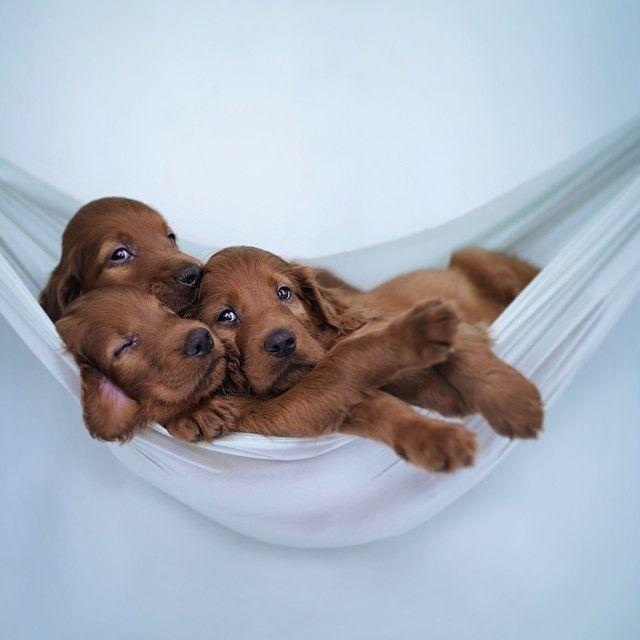 Perros bebes