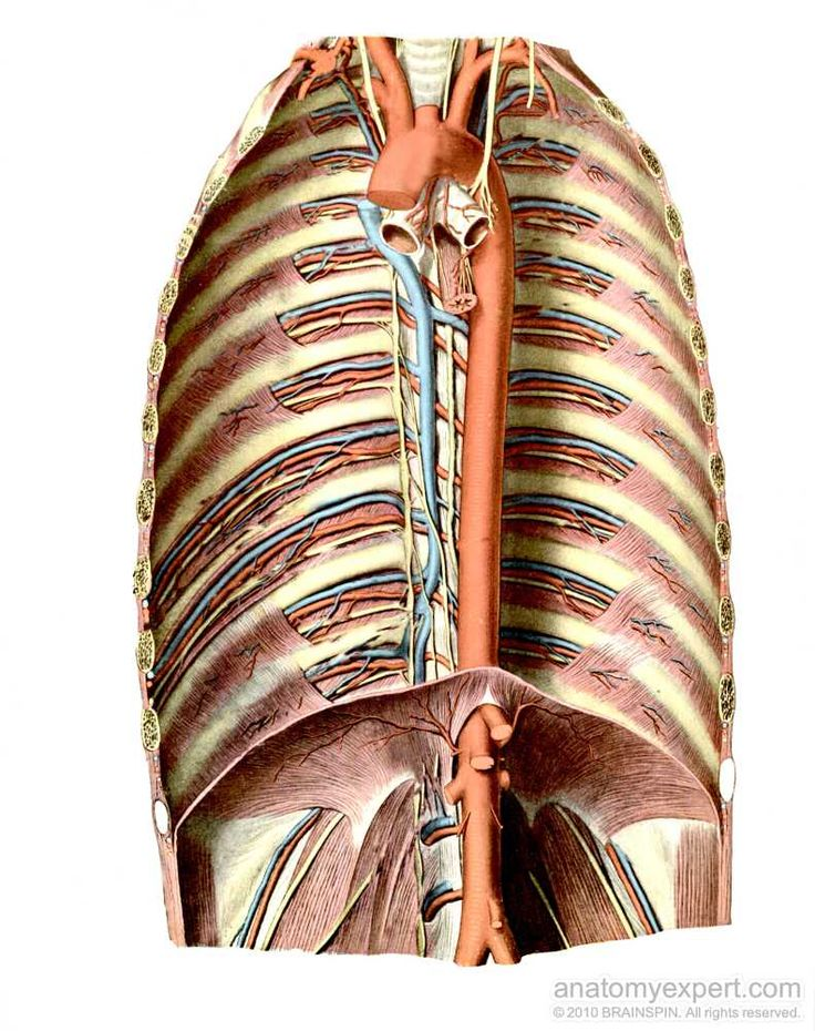 69 best reflexology foot images on Pinterest | Reflexología ...