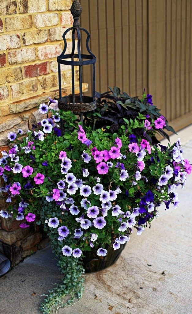 Find A Gardener Gardening Container Gardening Container Flowers Container Gardening Flowers