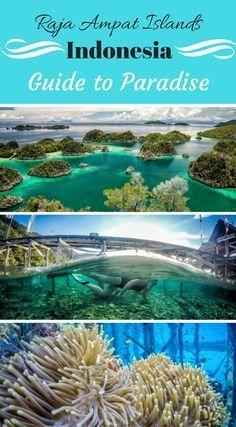 Raja Ampat Islands I #tagsforlikes #tflers #nofilter #wcw #wednesday #sister #bestoftheday #beautiful #hike #nyc #newyork #centralpark #walking #friends #cancun #gapyear #getinstalike #hot #ilove #instalife #instalive #love #manikmexico #mexican #mexico #mexicocity #mexicodf #sun #traveler #travelphotography