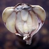 Slicing open a test garlic bulb will tell you if the cloves have filled out.