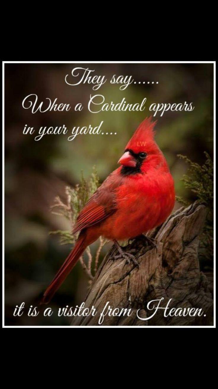 Best 25 red cardinal meaning ideas on pinterest cardinal birds heavenly cardinal buycottarizona