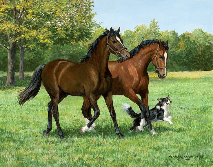Play Mates – Horses & Dog Original Painting  by Persis Clayton Weirs  pair of horses running through a pasture with their canine companion.