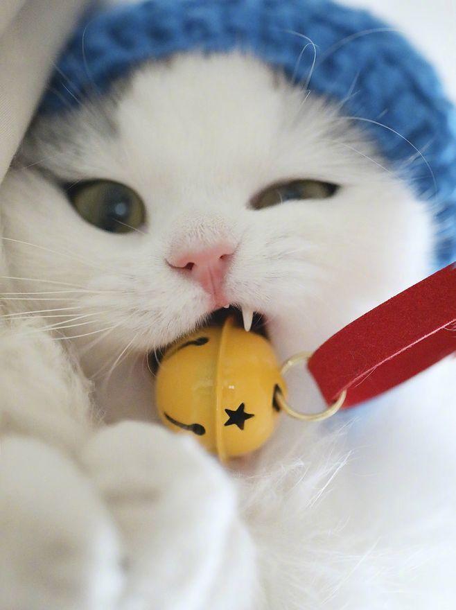 Pets Cat ล กแมว แมวน าร ก ส ตว เล ยง