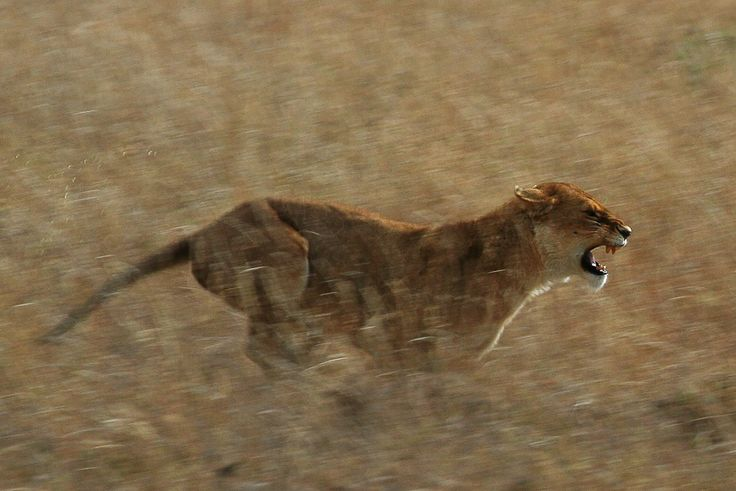 serengetti - Bing Images