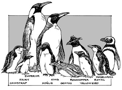 Okaaay, who knew there were SO many types of penguins!!