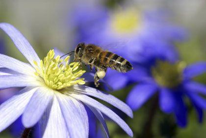 Wespen kunnen soms een plaag vormen in de tuin.