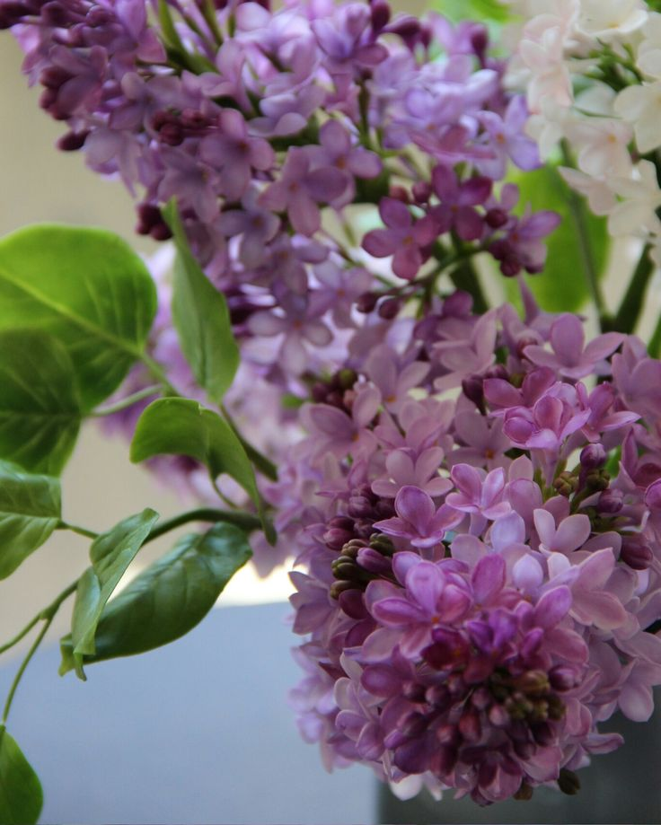 Lilac from polimer clay. #ivilisflowers