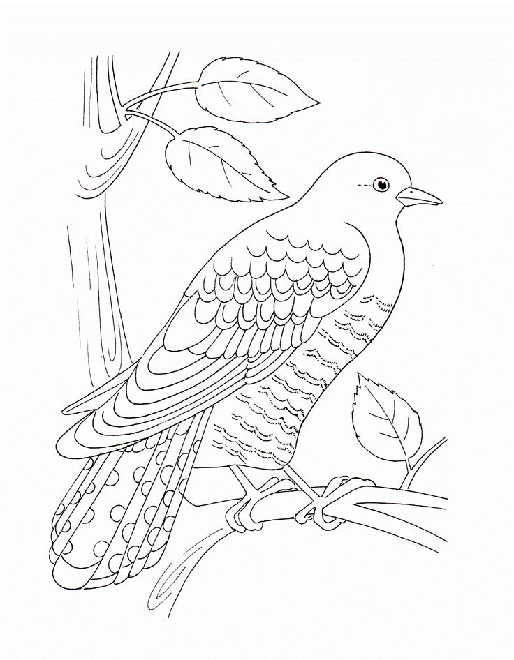Beautiful Bird With Wings Coloring Pages For Kids Printable Birds