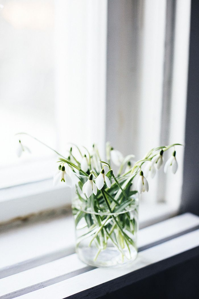 Takes from the flower diary: snowdrop