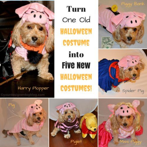 $$ saving #Halloween costume ideas for your #dog!