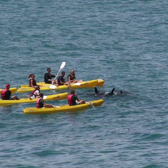Looking for whales on a sea-kayak