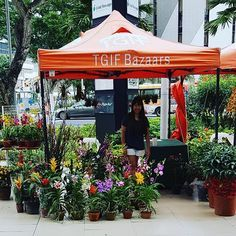 We are at TGIF Bazaar @ One KM Mall this weekend online orders available for pickup here till Sunday 10pm #tohgarden #singapore #tropical #farm #citrus #mandarinoranges #buddhapalm #lemons #chinesenewyear # #orchidlove #plumblossom #cherryblossom#potplants #azalea #plant #photooftheday #orchids #camelia #guzmania #flowers #naturelover #nature #vriesia #