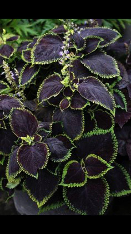 17 besten zimmerpflanzen bilder auf pinterest sukkulenten zimmerpflanzen und landschaftsbau. Black Bedroom Furniture Sets. Home Design Ideas