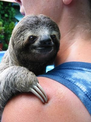 Woman Holding A Pretty Sloth
