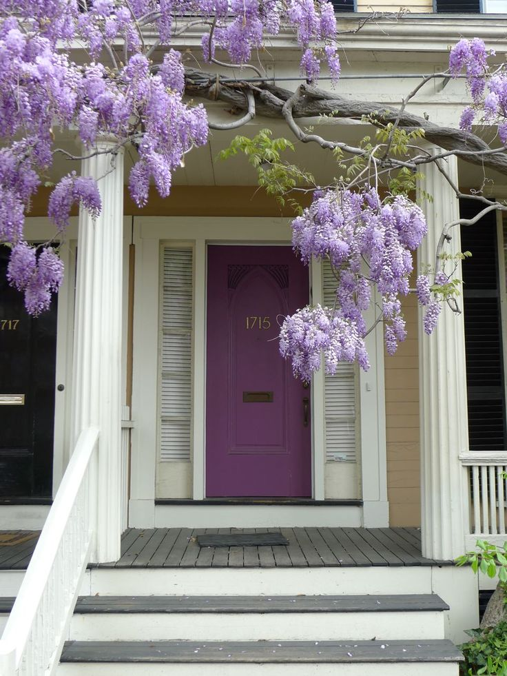 Purple front door with Wisteria vine.