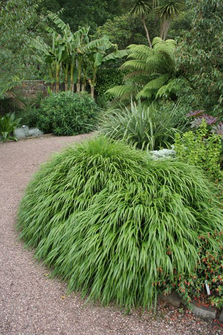 Tropical Gardens | Hakonechloa macra in forefront of ferns, palms and other tropical plants