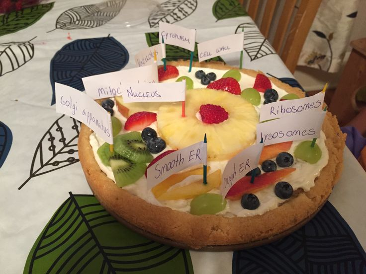 animal cell cake model ingredients