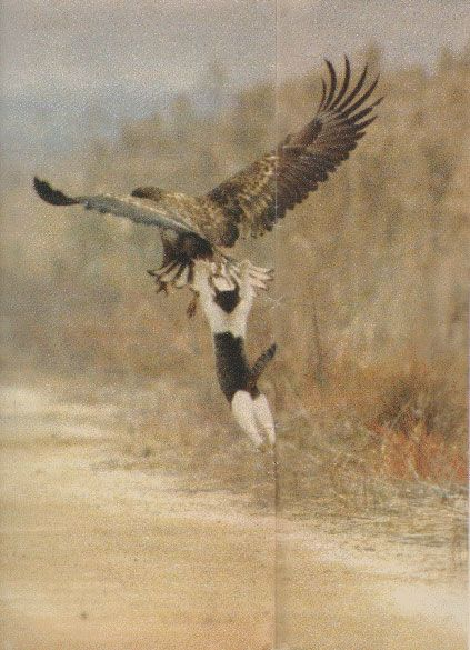 I believe I can fly~