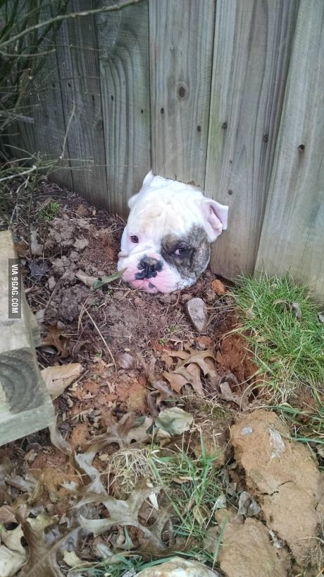 Puppy Please love me