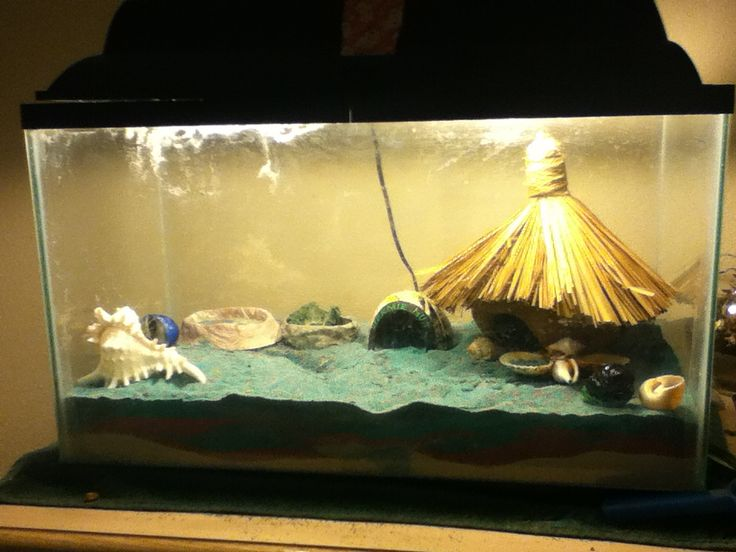 Hermit crab habitat they are my pet hermit crabs | animals ...