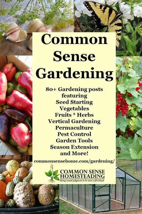 Common Sense Gardening   Home Garden Ideas From Planting To Harvest