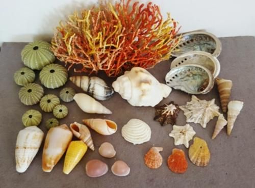 Buy Sea Shells & rare sea grass from Jeffreys Bay (cleaned handpicked) beach, driftwood, fish aqarium for R39.50