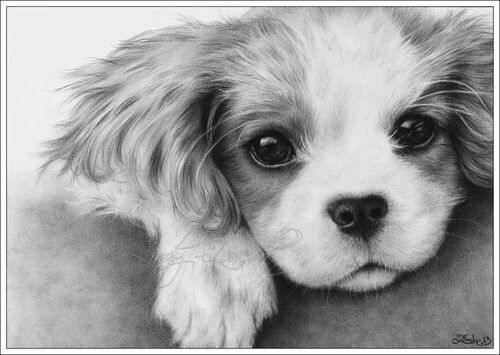 Cute Dog Sketch Art Inspiration Pinterest Dogs Sketches And Dogs