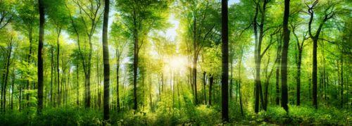 Küchenrückwände - Wald Panorama mit Sonnenstrahlen, eine tolle Nischenrückwand die für positive Stimmung zu jeder Jahreszeit in Ihrer Küche sorgt. nischenverkleidung.tidis.de