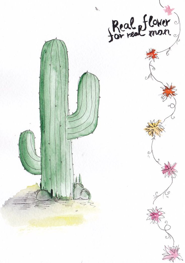 Watercolor cactus Postcard Real flower by mariaptore