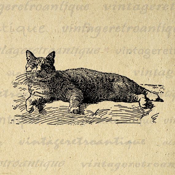 Manx Cat Digital Graphic Download Image Printable Artwork Vintage Clip Art Jpg Png Eps  HQ 300dpi No.3072