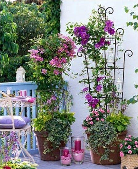 Вертикальное озеленение балкона | 1000 секретов