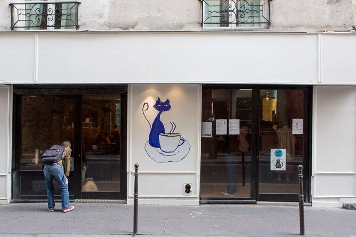 Le Café des Chats: Cat Cafe Arrives in Paris