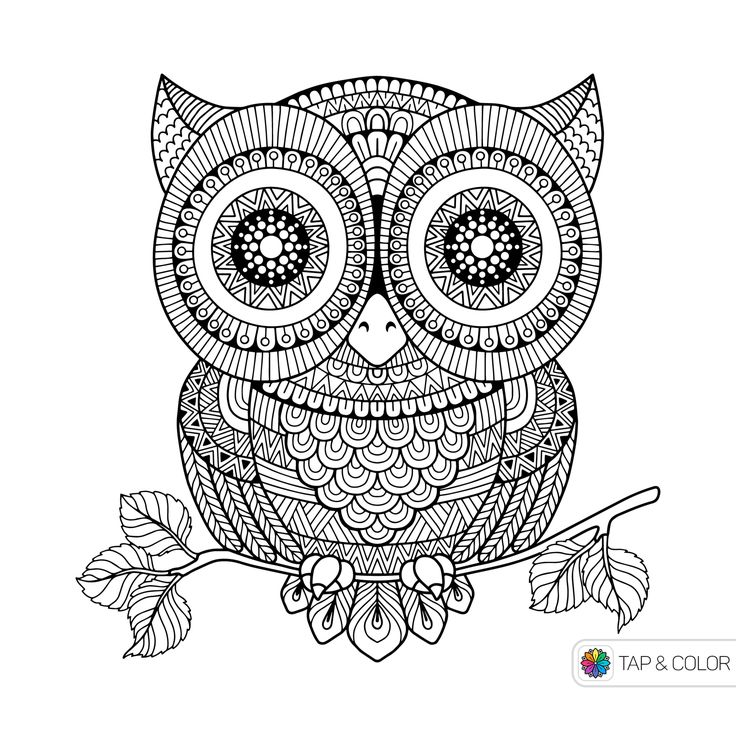 338 best Owl Coloring Pages images on Pinterest | Owls, Coloring ...