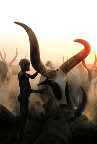 .: National Geographic, Boys, South Africa, Carol Beckwith, Longhorns, Holy Cows, Photo, Angela Fisher, Animal