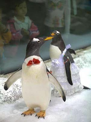 2010 yılında Çin'de yapılan toplu penguen düğününden bir kare.
