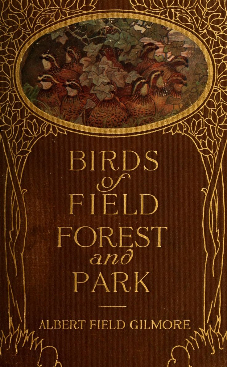 'Birds of Field Forest and Park' by Alfred Field Gilmore. The Page Co.; Boston, 1919