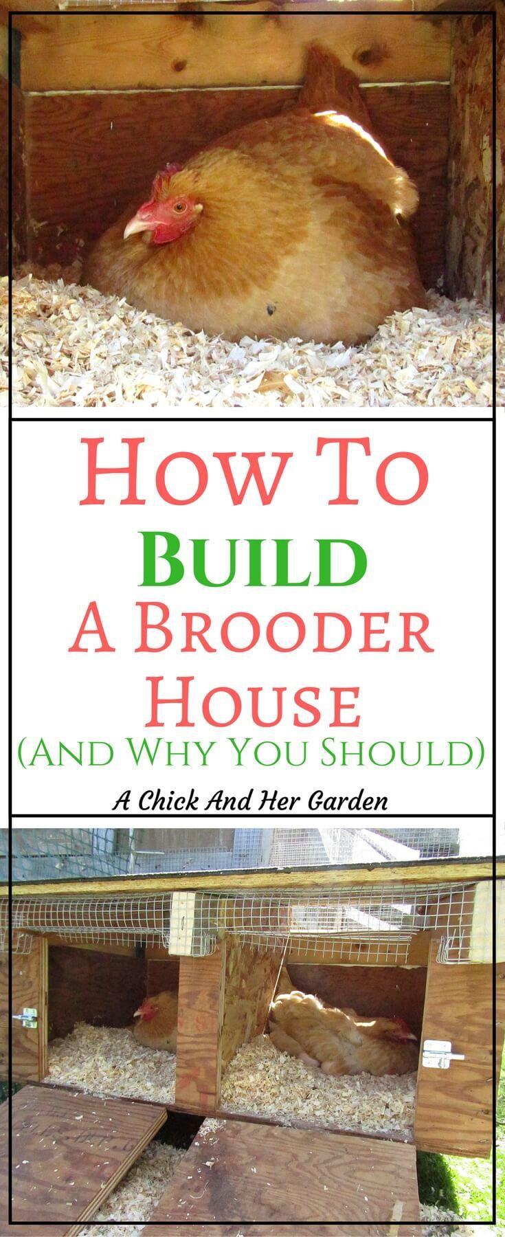 Kitchen Garden Hens 17 Best Ideas About Hens On Pinterest Chicken Breeds Chicken