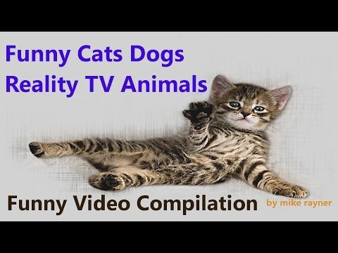 Funny Cats Dogs and Animals, Best Cat Dog Agility Compilation. Reality TV Pet Vines, Top Fails 2016 - http://positivelifemagazine.com/funny-cats-dogs-and-animals-best-cat-dog-agility-compilation-reality-tv-pet-vines-top-fails-2016/ http://img.youtube.com/vi/i10iKvIybfQ/0.jpg                                             Funny Cats Dogs and Animals, Best Cat Dog Agility Compilation. Reality TV Pet Vines, Top Fails 2016. New Very Funny Animals Agility Fails. Hilarious Cats An