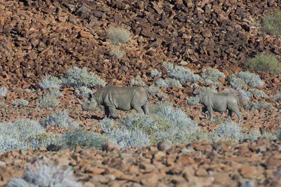 We can save the rhino - YES WE CAN! #Safari #Africa #Namibia #WildernessSafaris